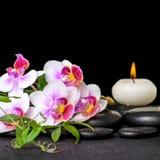 Piękny zdroju wciąż życie purpurowy storczykowy phalaenopsis, zielony tw obraz royalty free