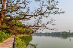 Piękny zieleń park & błękita nieba jasny krajobraz Linia płotowej i czerwonej cegły ścieżka na lata ` s dniu Zdjęcia Royalty Free