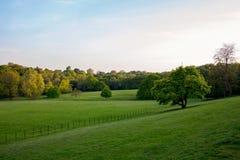 Piękny zieleń parka krajobraz zdjęcie stock