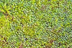 Piękny zielonej trawy tło Obraz Royalty Free