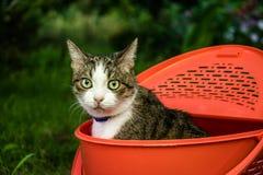 Piękny zielonooki kot w lato ogródzie fotografia royalty free