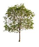 Piękny zielony drzewo fotografia stock