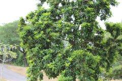 piękny zielony drzewo zdjęcia royalty free