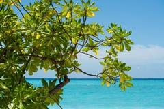 Piękny zielony drzewo z widok na ocean Obraz Royalty Free