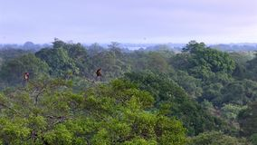 Piękny zielony las w wiejskim krajobrazie zdjęcie wideo
