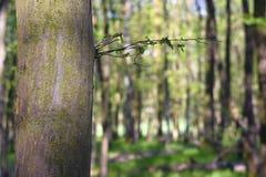 Piękny zielony las w wiośnie Obrazy Stock