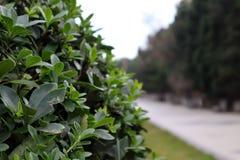 Piękny zielony liść opuszcza obok droga przemian w parku z zamazanym tłem zdjęcie stock