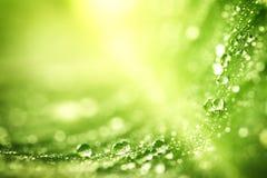 Piękny zielony liść z kroplami woda Obrazy Royalty Free