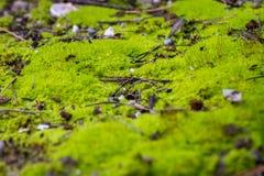 Piękny zielony mech na podłodze, mech w górę, makro- Piękny tło mech dla tapety Mech przedpole fotografia royalty free