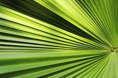 Piękny zielony palmowego liścia zakończenie r outdoors Miękkiej części i plamy poczęcie Obrazy Stock