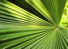 Piękny zielony palmowego liścia zakończenie r outdoors Miękkiej części i plamy poczęcie Obraz Stock