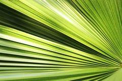Piękny zielony palmowego liścia zakończenie r outdoors Miękkiej części i plamy poczęcie Fotografia Stock