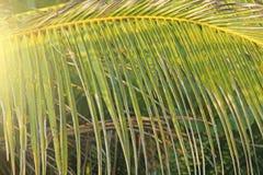 Piękny Zielony Palmowy liść i słońce Zielony tło drzewka palmowe tropikalny tło egzot kosmos kopii fotografia stock