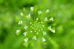 Piękny zielony tło zielonej trawy ok obrazy stock