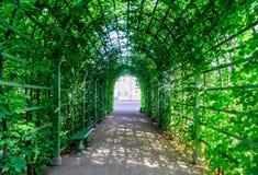 Piękny zielony tunel od rośliien Zdjęcie Stock