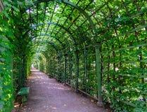 Piękny zielony tunel od rośliien Zdjęcia Royalty Free