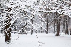 Piękny zima śnieg Zdjęcia Royalty Free