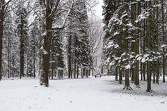 Piękny zima śnieg Zdjęcia Stock