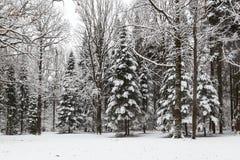 Piękny zima śnieg Zdjęcie Stock