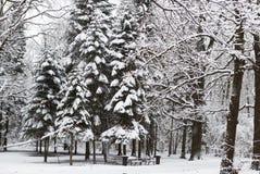 Piękny zima śnieg Fotografia Royalty Free
