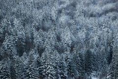 Piękny zima krajobraz, śnieg zakrywał drzewa Obrazy Royalty Free