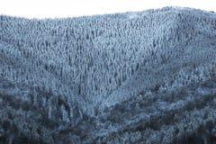 Piękny zima krajobraz, śnieg zakrywał drzewa Zdjęcia Stock