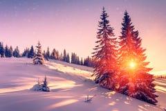 Piękny zima krajobraz w górach Widok śnieżyści conifer drzewa, płatki śniegu przy wschodem słońca i Wesoło boże narodzenia i szcz fotografia stock