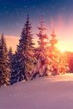 Piękny zima krajobraz w górach Widok śnieżyści conifer drzewa, płatki śniegu przy wschodem słońca i Wesoło boże narodzenia i szcz zdjęcie stock