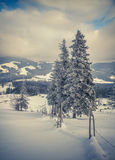 Piękny zima krajobraz w halnym lesie Fotografia Stock