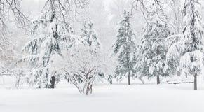 Piękny zima krajobraz w parku Drzewa zakrywający z śniegiem jodła zdjęcia stock