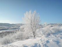 Piękny zima krajobraz z śnieżnobiałymi drzewami zakrywającymi z mrozowym jaskrawym słonecznym dniem obraz royalty free