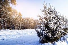 Piękny zima krajobraz z śniegi zakrywającymi drzewami zdjęcia royalty free