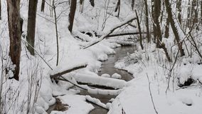 Piękny zima krajobraz z śniegi zakrywającymi drzewami zdjęcie wideo