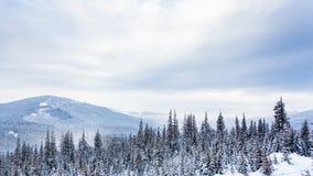 Piękny zima krajobraz z śniegi zakrywającymi drzewami caucasus Georgia gudauri gór zima zbiory wideo