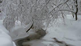 Piękny zima krajobraz z śniegiem zakrywał drzewa i zamarzniętą lasową rzekę zdjęcie wideo