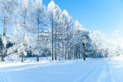 Piękny zima krajobraz z śniegiem zakrywał drzewa - pogodny zima dzień Zdjęcie Royalty Free