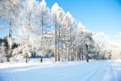Piękny zima krajobraz z śniegiem zakrywał drzewa - pogodny zima dzień Fotografia Royalty Free