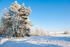 Piękny zima krajobraz z śniegiem zakrywał drzewa - pogodny zima dzień Obraz Stock
