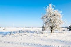 Piękny zima krajobraz z śniegiem zakrywał drzewa - pogodny zima dzień Obrazy Royalty Free