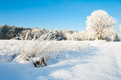 Piękny zima krajobraz z śniegiem zakrywał drzewa - pogodny zima dzień Zdjęcie Stock