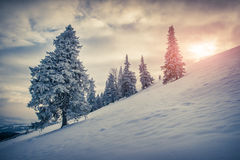 Piękny zima wschód słońca w halnym lesie Fotografia Royalty Free