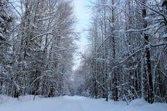 Piękny zimy landscape Śnieżny las zdjęcie stock