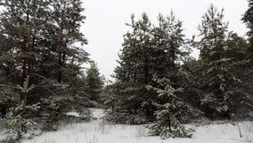 Piękny zimy landscape Abstrakcjonistyczny sosnowy lasowy tło Obrazy Royalty Free
