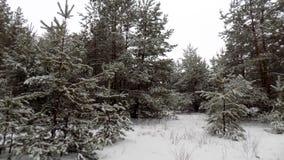 Piękny zimy landscape Abstrakcjonistyczny sosnowy lasowy tło Zdjęcia Stock