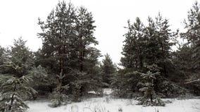 Piękny zimy landscape Abstrakcjonistyczny sosnowy lasowy tło Obrazy Stock