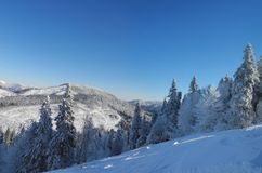 Piękny zimy landscape Drzewa i góry zakrywający z fre Obraz Royalty Free