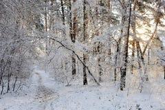 Piękny zimy landscape Drzewa zakrywający z śniegiem w lesie Fotografia Stock