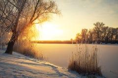 Piękny zimy landscape Gałąź drzewa są covere Zdjęcia Stock