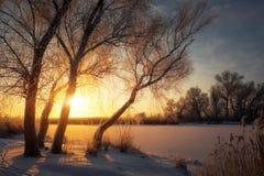 Piękny zimy landscape Gałąź drzewa zakrywają z hoarfrost Zdjęcie Stock