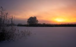 Piękny zimy landscape mglisty poranek wschód słońca obraz royalty free